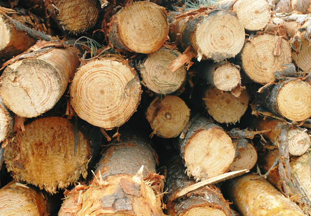 Confused Everything You Need To Know About Wood Wood
