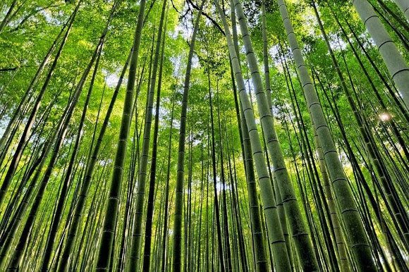 Bamboo Forest of Sagano, Japan