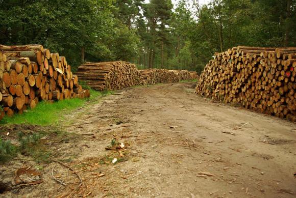 Logging in Wykeham Forest