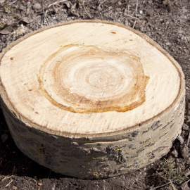 tree section rings