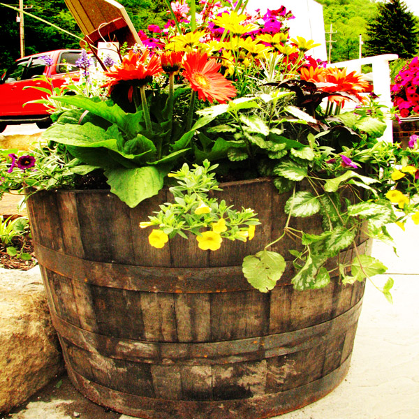 Beer Barrel Planter