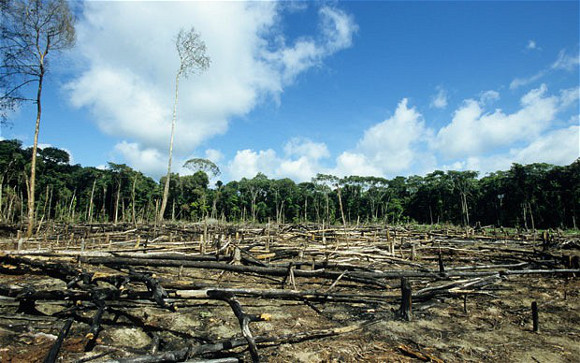 What are the positive effects of deforestation?