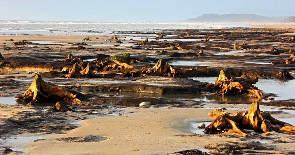 parts-of-Borth-Forest-uncovered-after-severe-storms