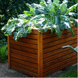 raised vegetable bed featured image