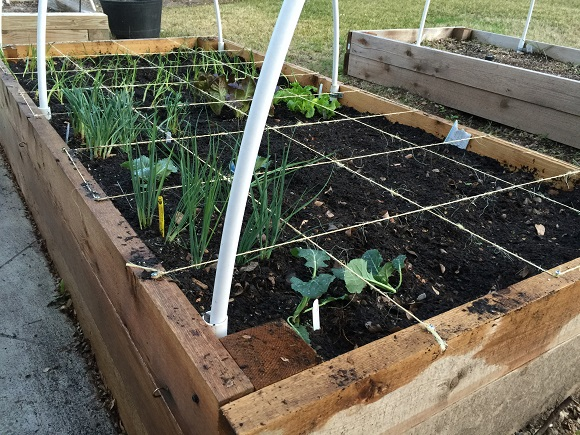 square-foot-raised-vegetable-garden