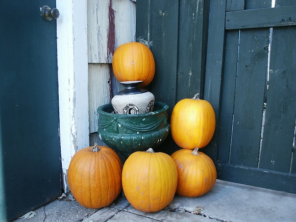 autumn-pumpkins-in-garden