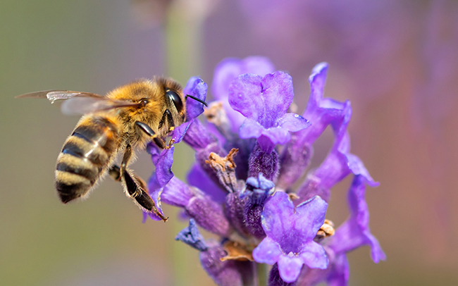 bees play a vital role in the life cycle of many plants.