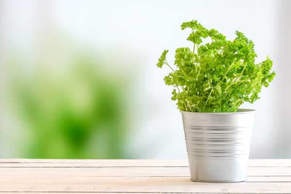 plant-life-eco-conscious