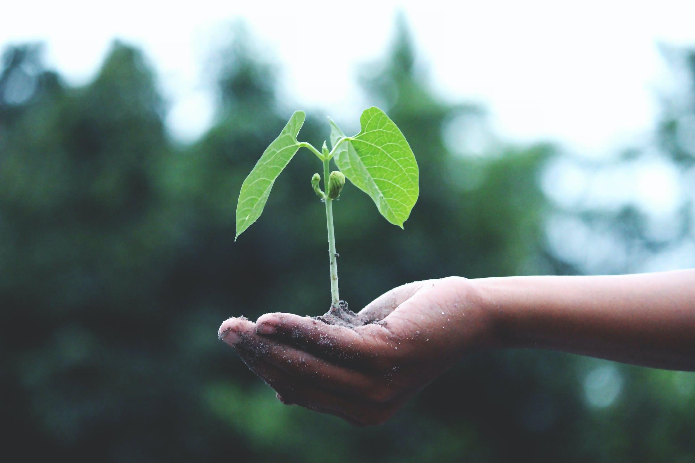 eco-friendly-plant