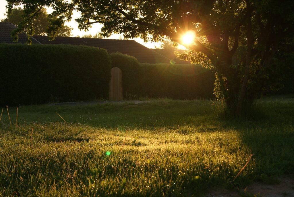 peaceful-garden