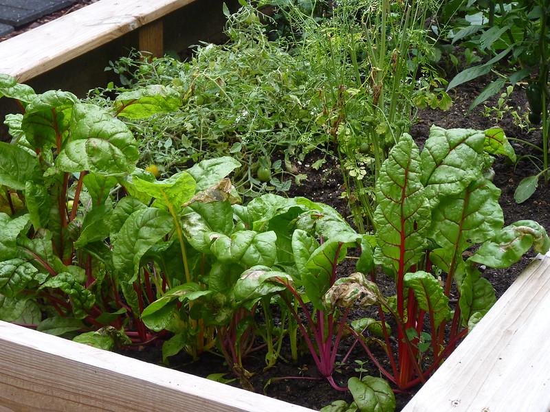 work-of-art-garden-bed