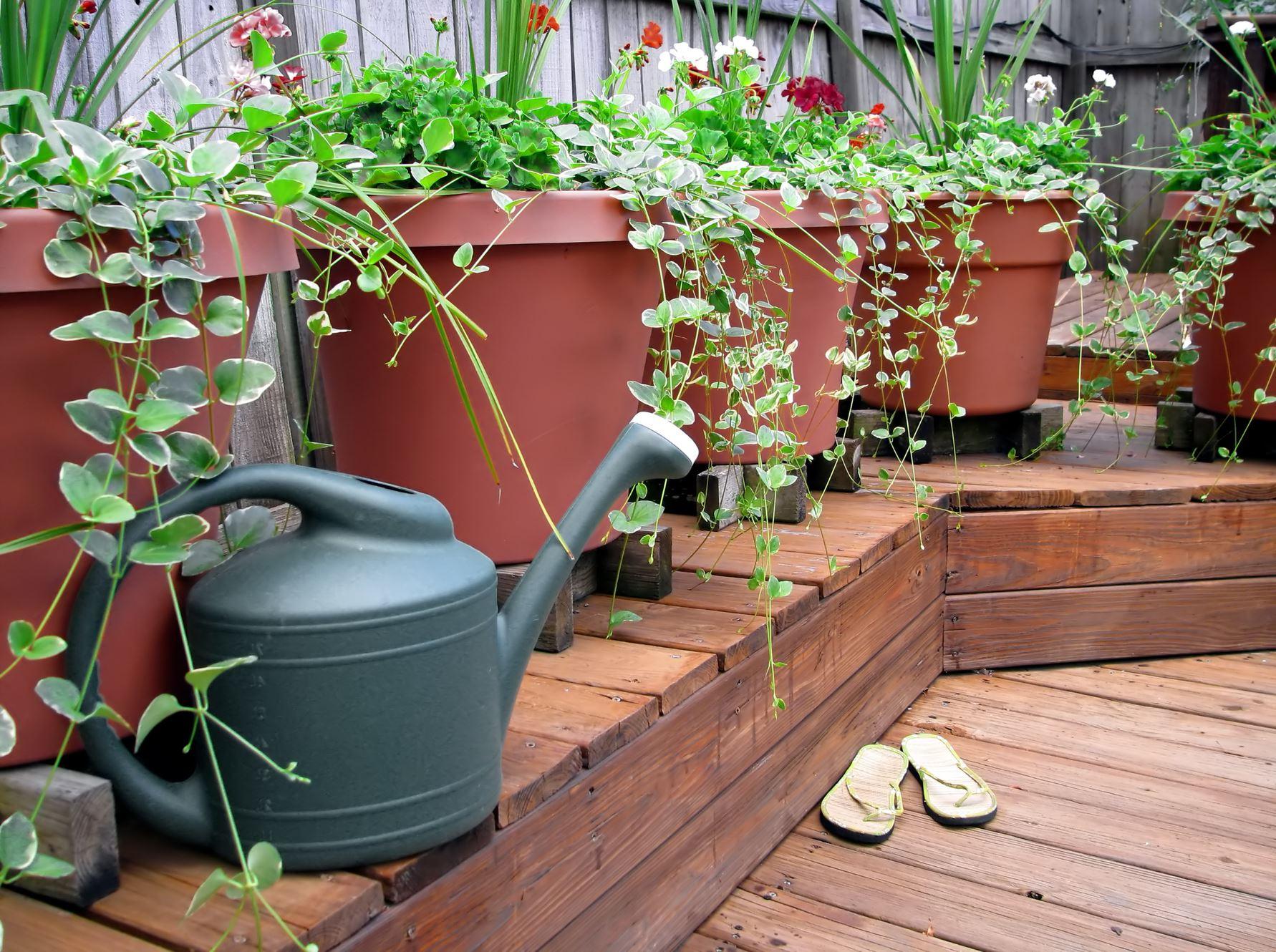 plants-decking